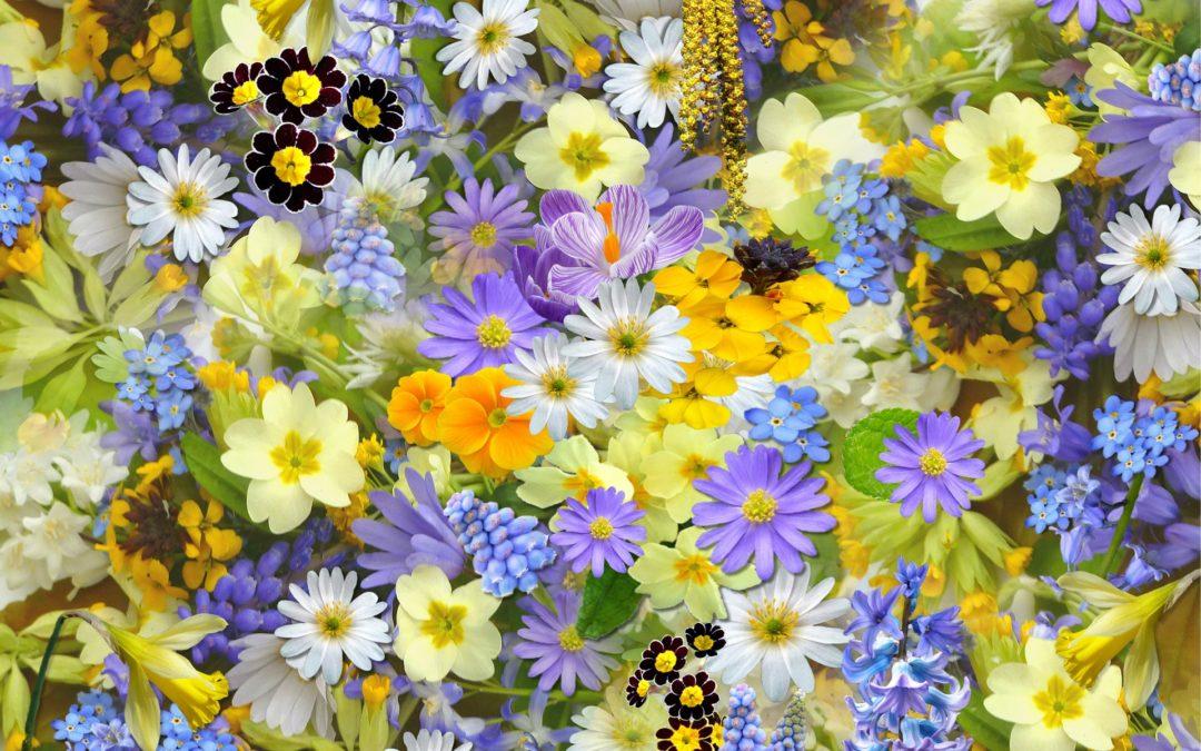 Bientôt le marché aux fleurs et les puces