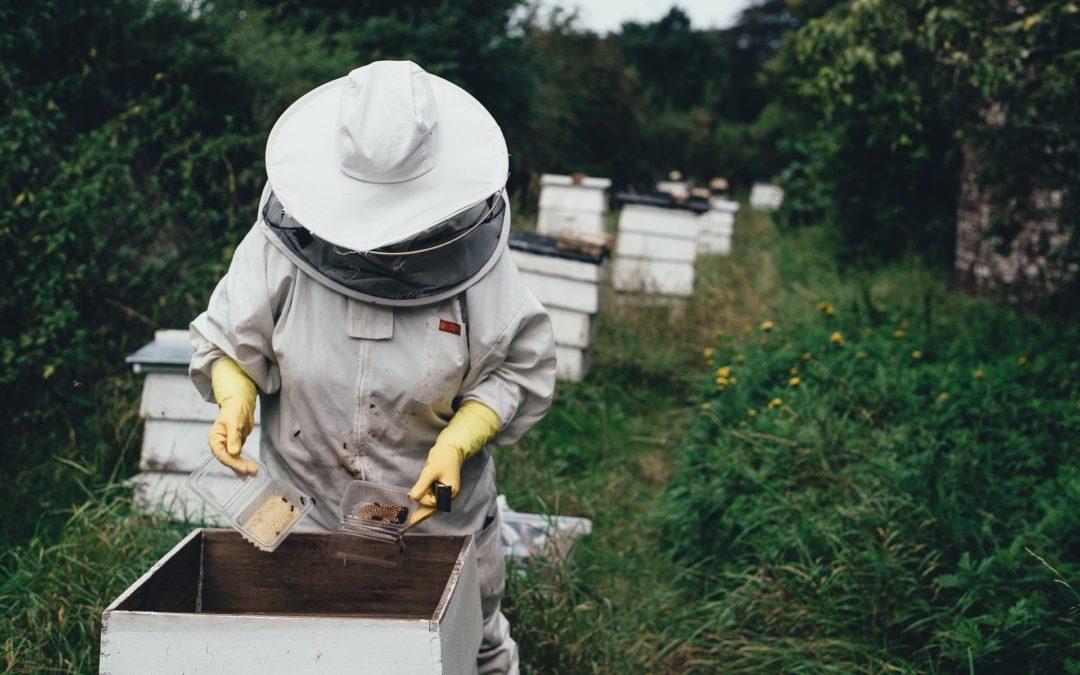 La canicule 2019 reconnue calamité agricole pour les apiculteurs